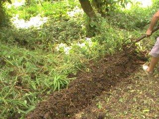 préparer le sol aux Antilles