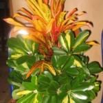 A la découverte des compositions florales