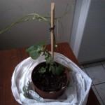 Mon plan de christophine : du petit pot à la jardinière