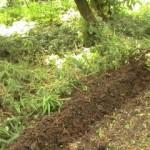 Comment préparer son sol pour planter des légumes aux Antilles